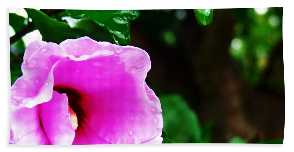 Pink Hand Towel featuring the photograph Rain Kissed Flower by Jannice Walker
