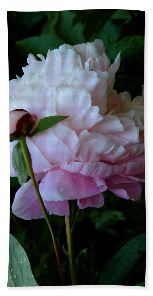 Peony Bath Towel featuring the photograph Rain-soaked Peonies by Rona Black