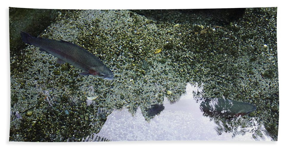 Water Bath Sheet featuring the photograph Rainbow Trout by Les Cunliffe