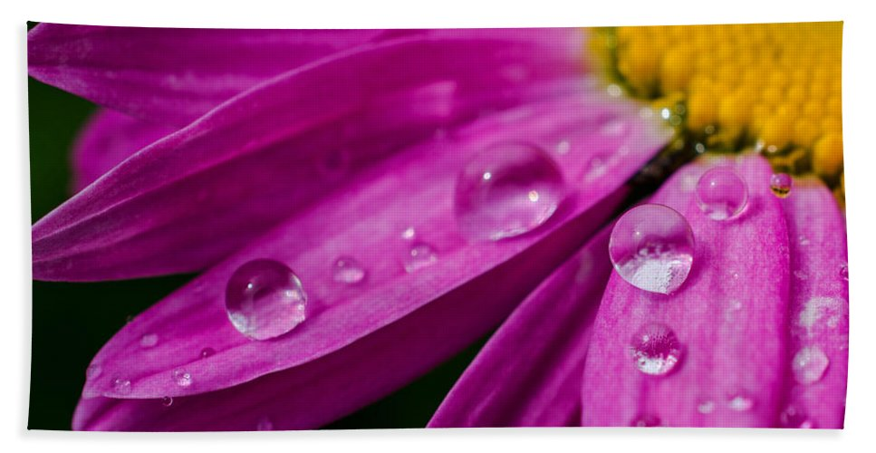 Springtime Bath Sheet featuring the photograph Raindrops On Daisies by Jordan Blackstone