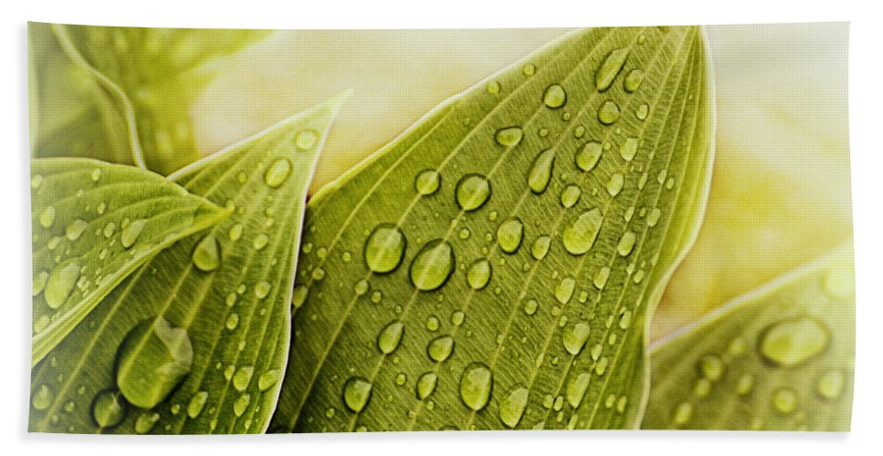 Hosta Prints Bath Sheet featuring the photograph Raindrops On Hostas by Mel Hensley