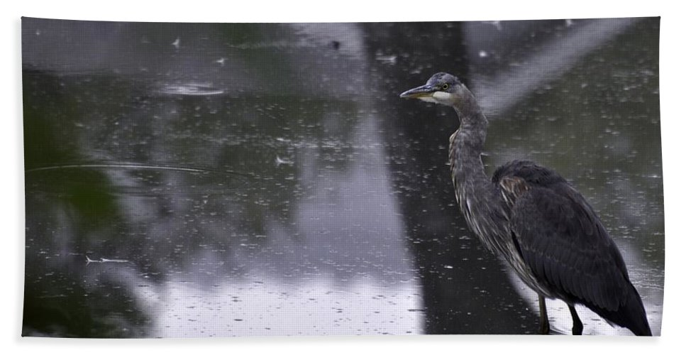 Oregon Bath Sheet featuring the photograph Rainy Day by Image Takers Photography LLC - Carol Haddon