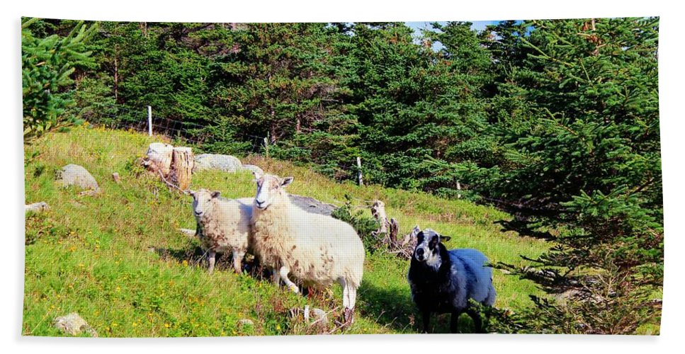 Ram And Ewes Bath Sheet featuring the photograph Ram And Ewes by Barbara Griffin