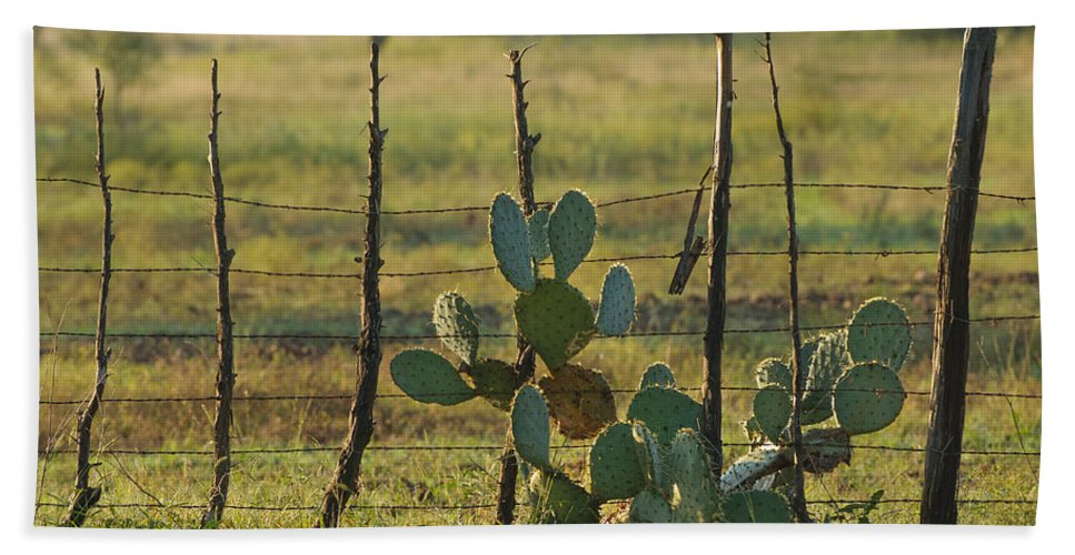 Cactus Hand Towel featuring the photograph Ranch Cactus by Sean Wray