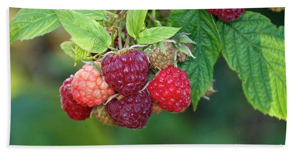 Edible Bath Sheet featuring the photograph Rasberries by Susan Herber