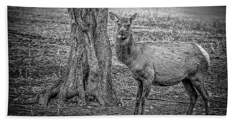Animals Hand Towel featuring the photograph Raspberry Elk Black And White by LeeAnn McLaneGoetz McLaneGoetzStudioLLCcom