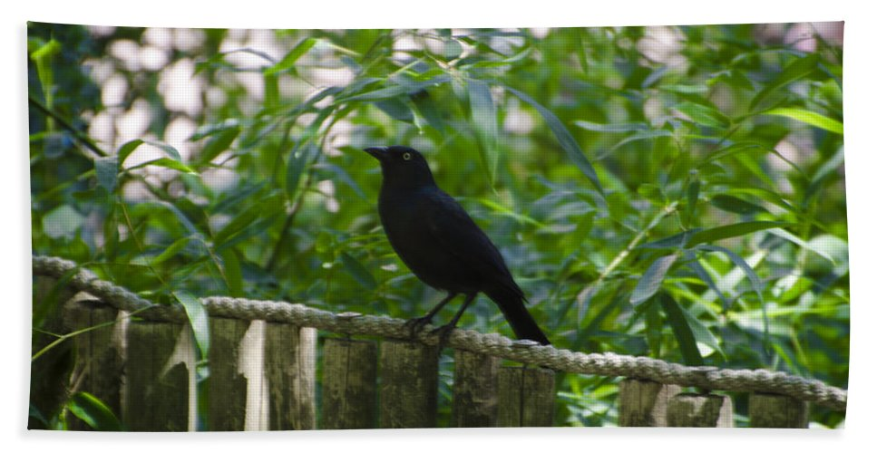 Raven Hand Towel featuring the photograph Raven In The Wild by Bill Cannon