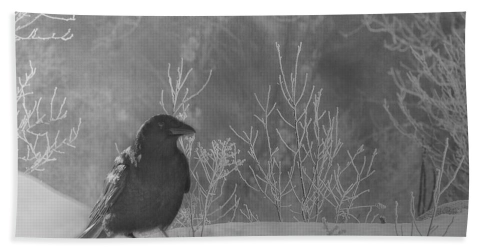 Raven Hand Towel featuring the photograph Ravenwood by Susan Capuano