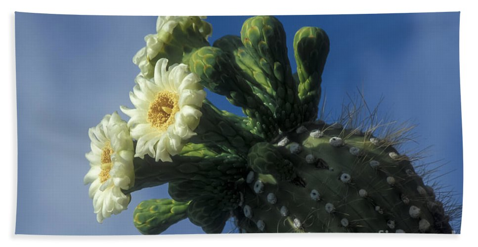 Cactus Bath Sheet featuring the photograph Reaching For The Sky by Sandra Bronstein