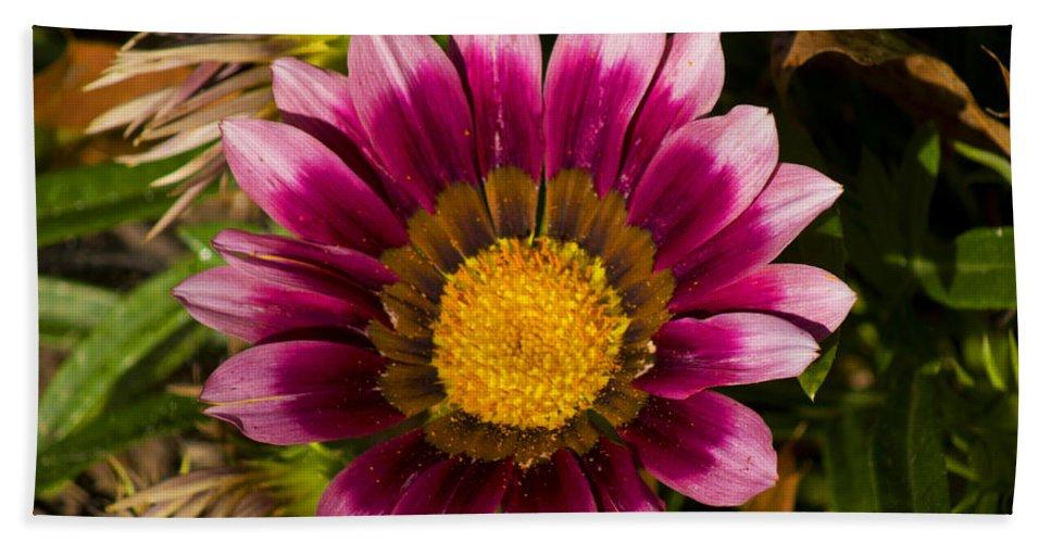 Flower Bath Sheet featuring the photograph Reaching Up by Joe Geraci