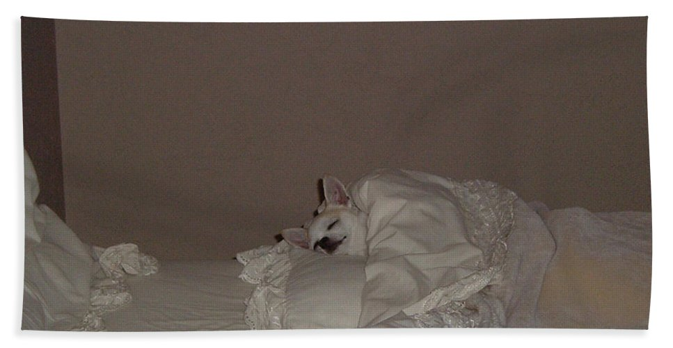 Chihuahua Hand Towel featuring the photograph Ready For Bed by Leah Delano