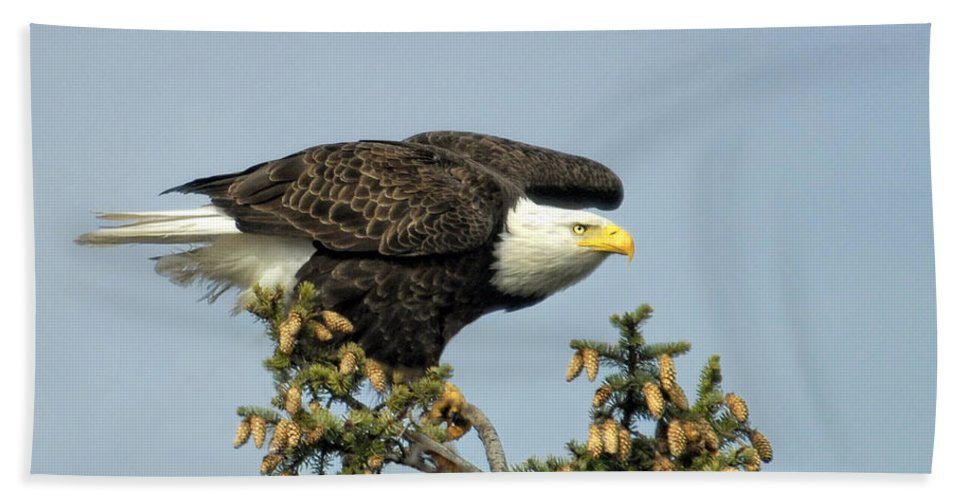 Bald Eagle Hand Towel featuring the photograph Ready For Takeoff by Claudia Kuhn