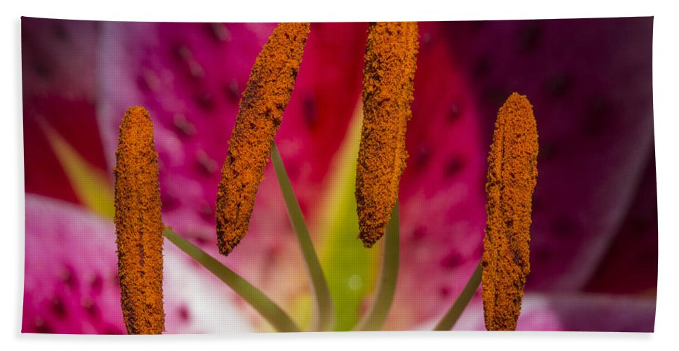 Lily Bath Sheet featuring the photograph Ready For That Bee 3 by Scott Campbell