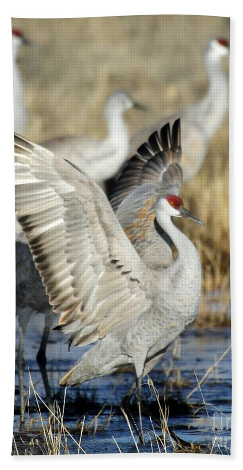 Bird Hand Towel featuring the photograph Ready To Fly by Sabrina L Ryan