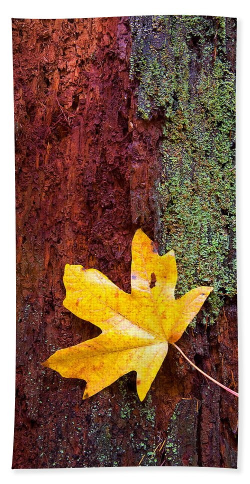 Leaves Hand Towel featuring the photograph Reclamation by Mike Dawson