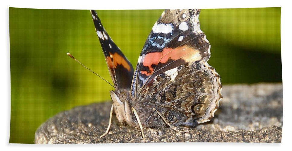Red Admiral Butterfly Bath Towel featuring the photograph Red Admiral Butterfly by David Lee Thompson