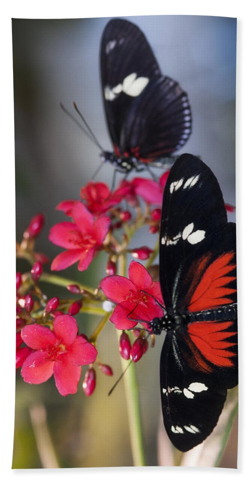 Red And White Longwing Butterflies Bath Towel featuring the photograph Red And White Longwing Butterflies by Saija Lehtonen