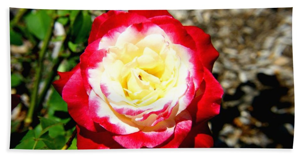 Red Bath Sheet featuring the photograph Red And White Rose by Darren Burton