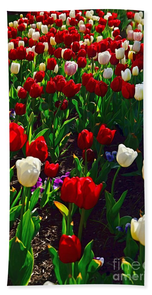 Photography Hand Towel featuring the photograph Red And White Tulip Art by Kaye Menner