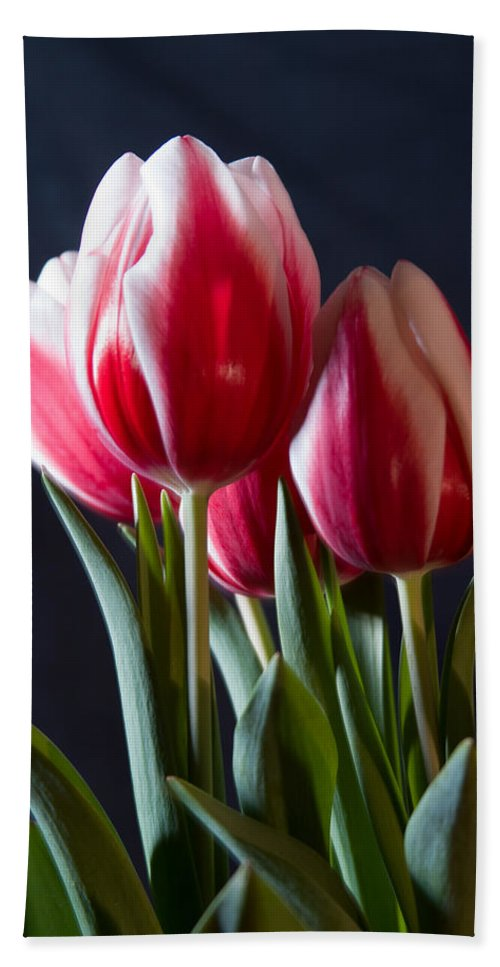 Flowers & Plants Hand Towel featuring the photograph Red And White Tulips by Jeff Folger