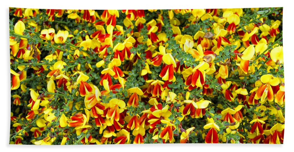 Scotland Hand Towel featuring the photograph Red And Yellow by Timothy Hacker