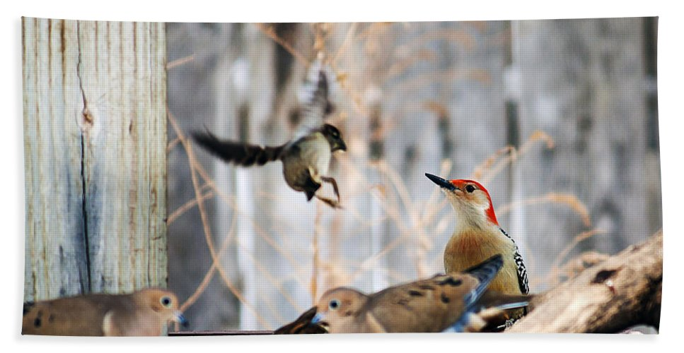 Red-bellied Woodpecker Hand Towel featuring the photograph Red-bellied Woodpecker And Friends by Edward Peterson