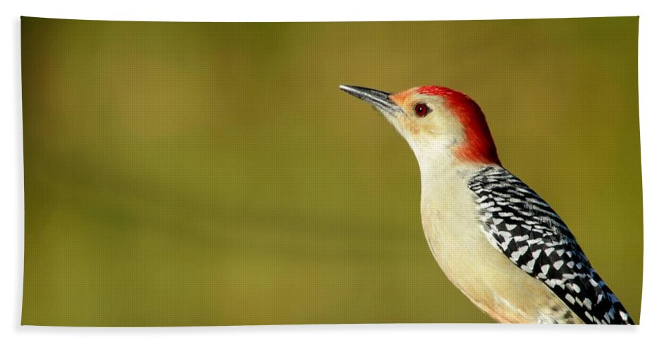 American Hand Towel featuring the photograph Red Bellied Woodpecker by Sabrina L Ryan