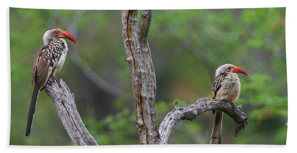 Hornbill Hand Towel featuring the photograph Red-billed Hornbills by Bruce J Robinson