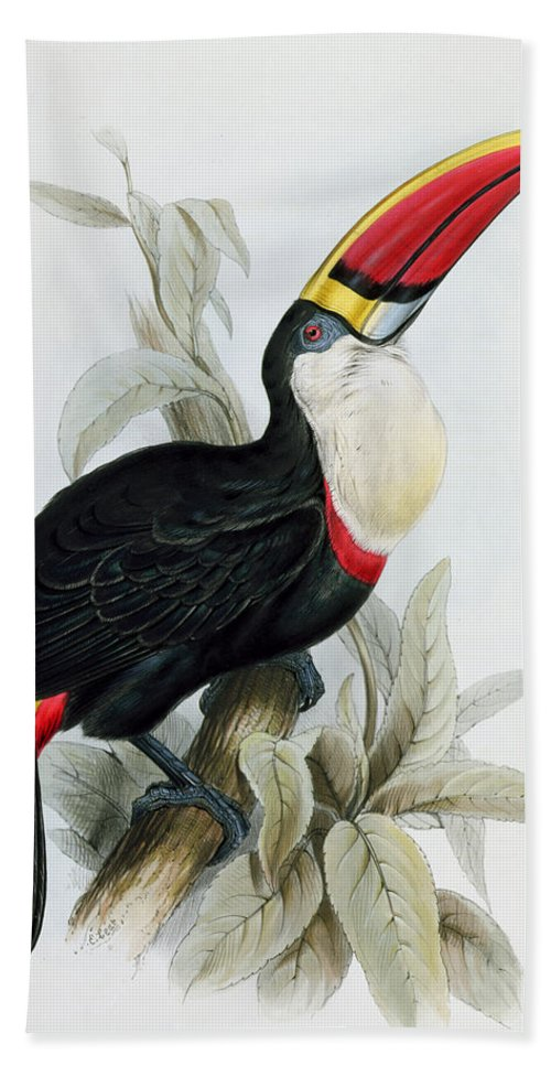 Red Billed Bath Towel featuring the painting Red-billed Toucan by Edward Lear