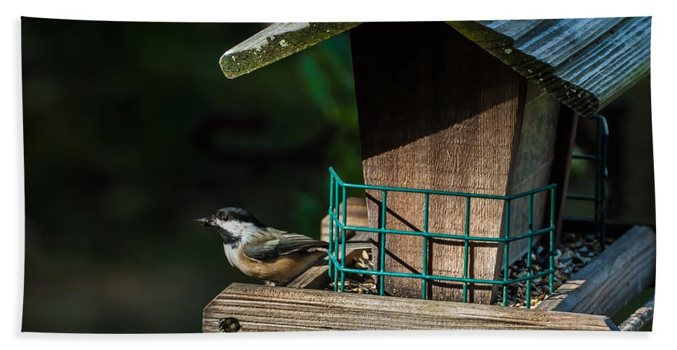 Red-breasted Nuthatch Bath Sheet featuring the photograph Red-breasted Nuthatch by Onyonet Photo Studios