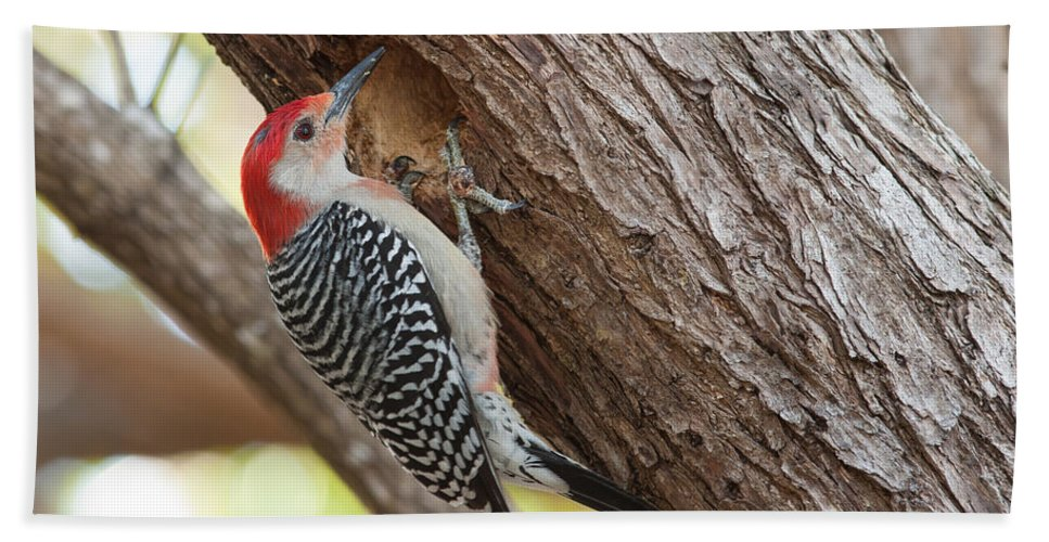 Woodpecker Hand Towel featuring the photograph Red-bellied Woodpecker by Paul Rebmann