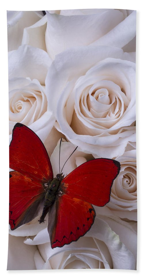 Red Hand Towel featuring the photograph Red Butterfly Among White Roses by Garry Gay
