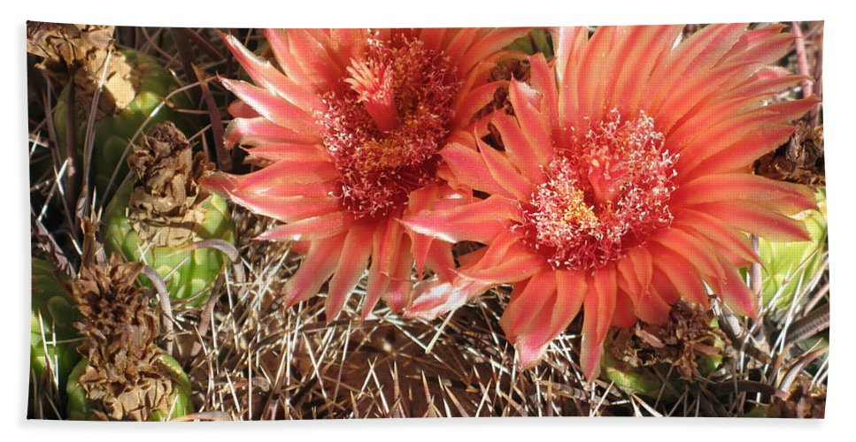 Cactus Hand Towel featuring the photograph Red Cactus by Christiane Schulze Art And Photography