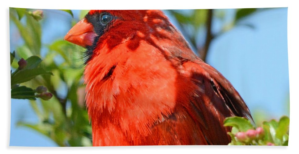 Nature Hand Towel featuring the photograph Red Cardinal Pink Blooms by Nava Thompson
