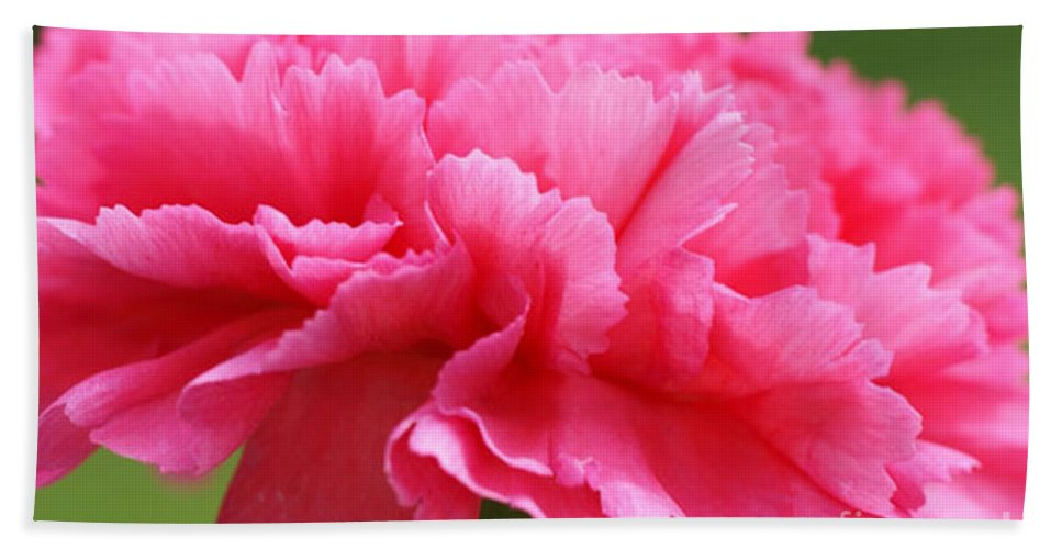 Carnation Bath Sheet featuring the photograph Red Carnation by Carol Lynch