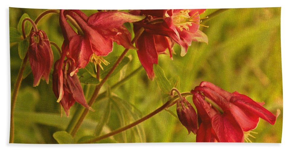 Red Columbine Bath Sheet featuring the photograph Red Columbine by Mel Hensley