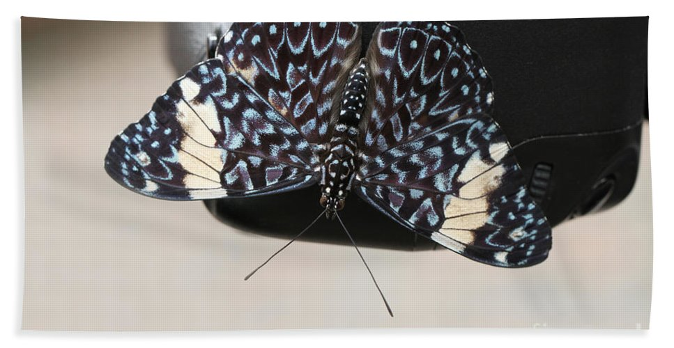 Butterfly Hand Towel featuring the photograph Red Cracker Butterfly by Judy Whitton