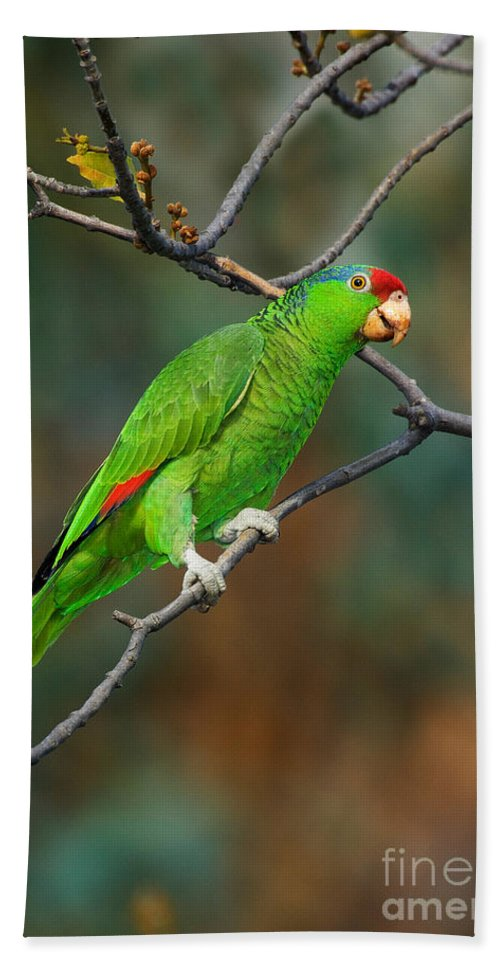 Red-crowned Amazon Hand Towel featuring the photograph Red-crowned Amazon by Anthony Mercieca