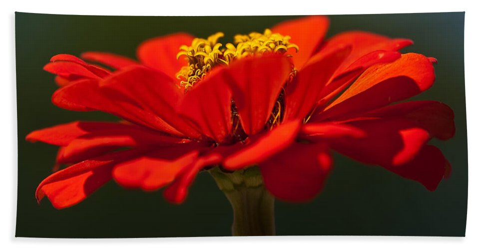 Zinnia Hand Towel featuring the photograph A Bee's Eye View by Onyonet Photo Studios