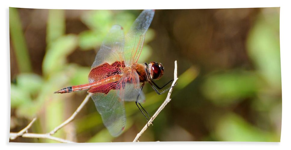 Dragonfly Bath Sheet featuring the photograph Red Dragon by Al Powell Photography USA