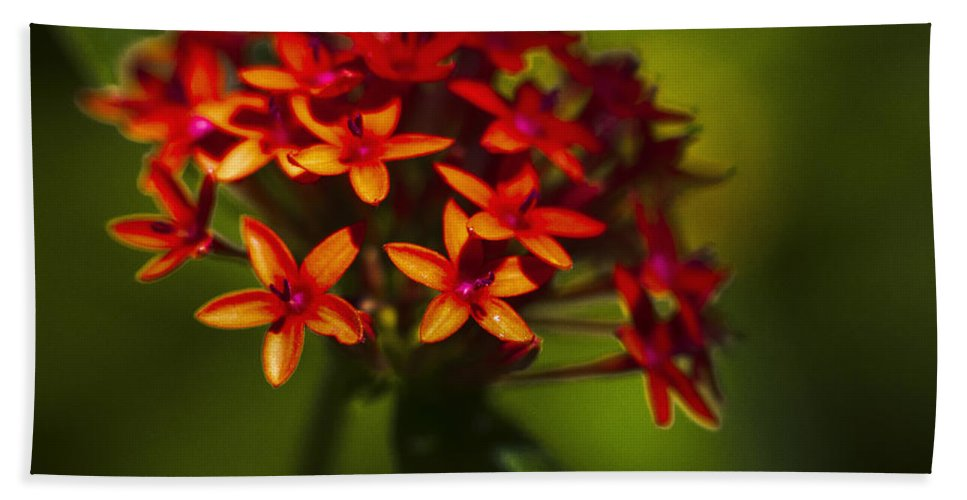 Flowers Bath Sheet featuring the photograph Red Flowers by Bradley R Youngberg
