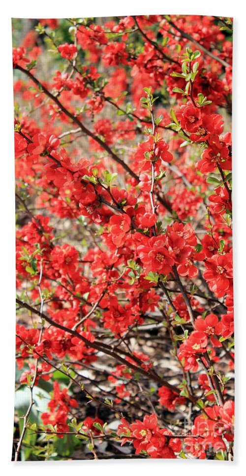 Red Flowers Hand Towel featuring the photograph Red Flowers by Julia Gavin