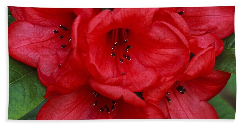 Red Flowers Hand Towel featuring the photograph Red Flowers by Wes and Dotty Weber