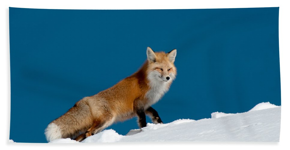 Red Fox Hand Towel featuring the photograph Red Fox by Gary Beeler