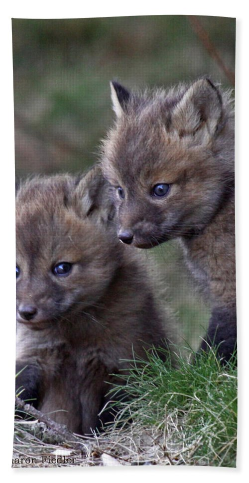 Maine Wildlife Bath Sheet featuring the photograph Red Fox Kits by Sharon Fiedler