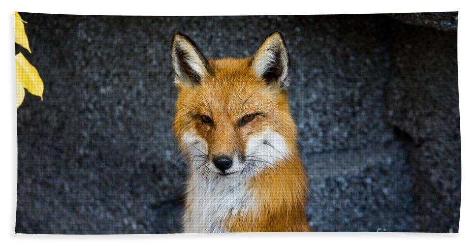 Fox Bath Sheet featuring the photograph Red Fox by Ms Judi