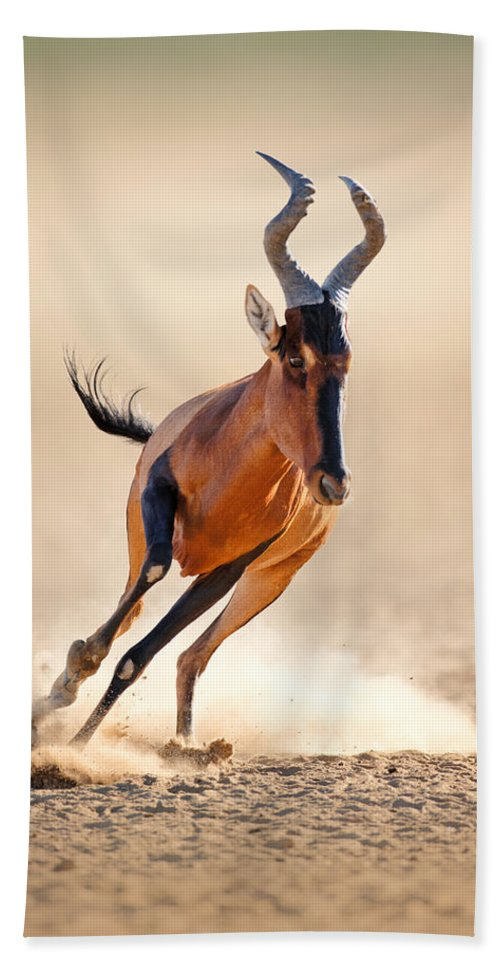 Hartebeest Hand Towel featuring the photograph Red Hartebeest Running by Johan Swanepoel