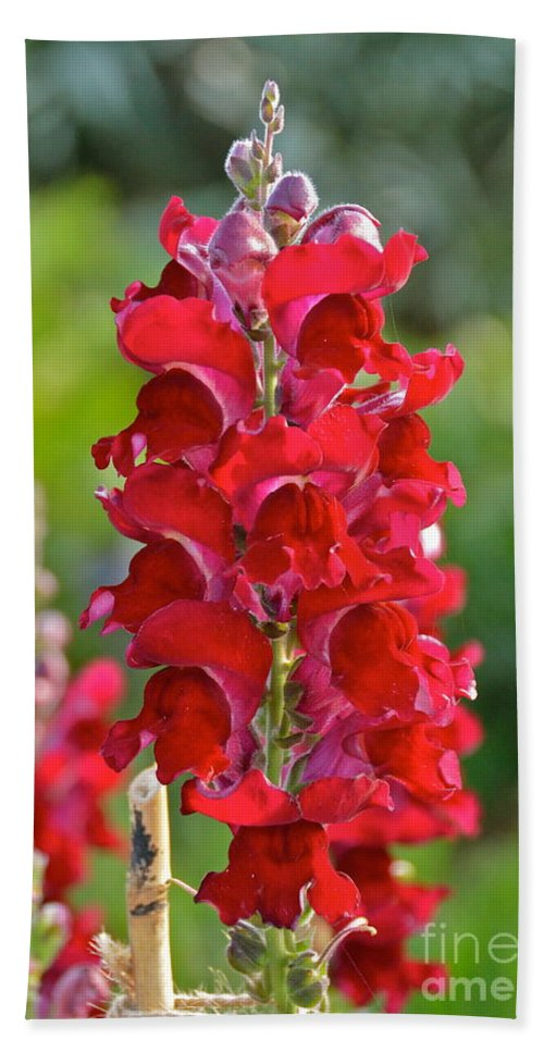 Flower Bath Sheet featuring the photograph Red Snapdragon by Carol Bradley