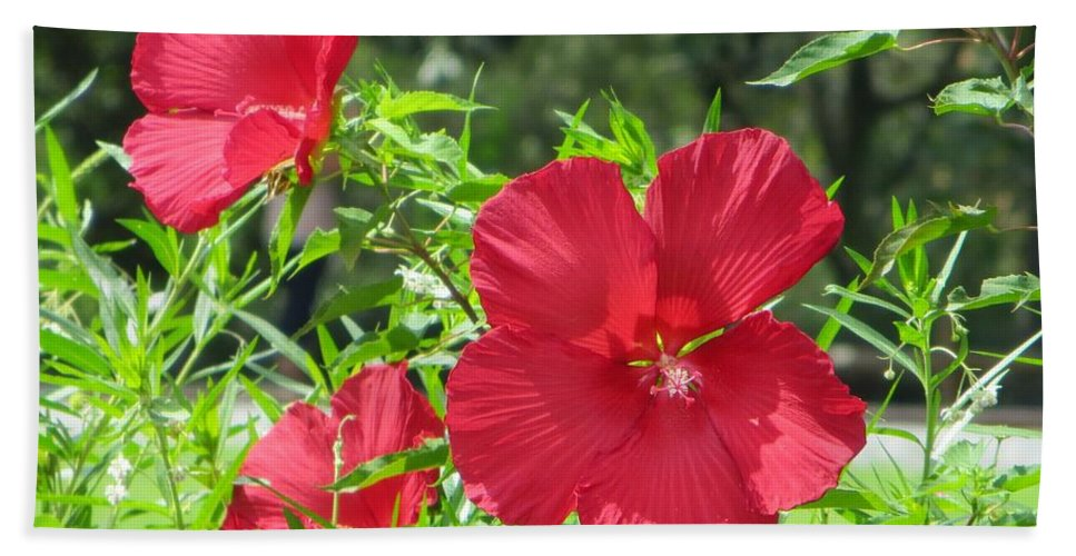 Red Flowers Bath Sheet featuring the photograph Red Hollyhocks by Sonali Gangane