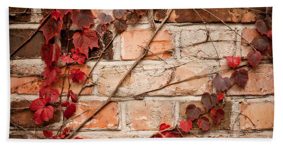 Abstract Bath Sheet featuring the photograph Red Ivy Leaves Creeper by Arletta Cwalina
